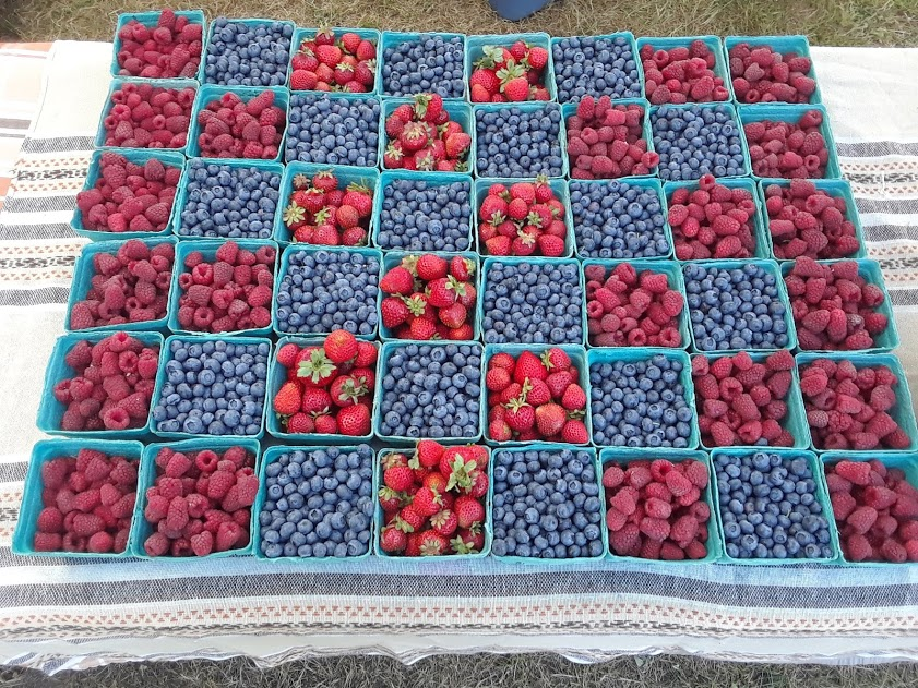 northstar organics, farm job, saanich, victoria bc, blueberries