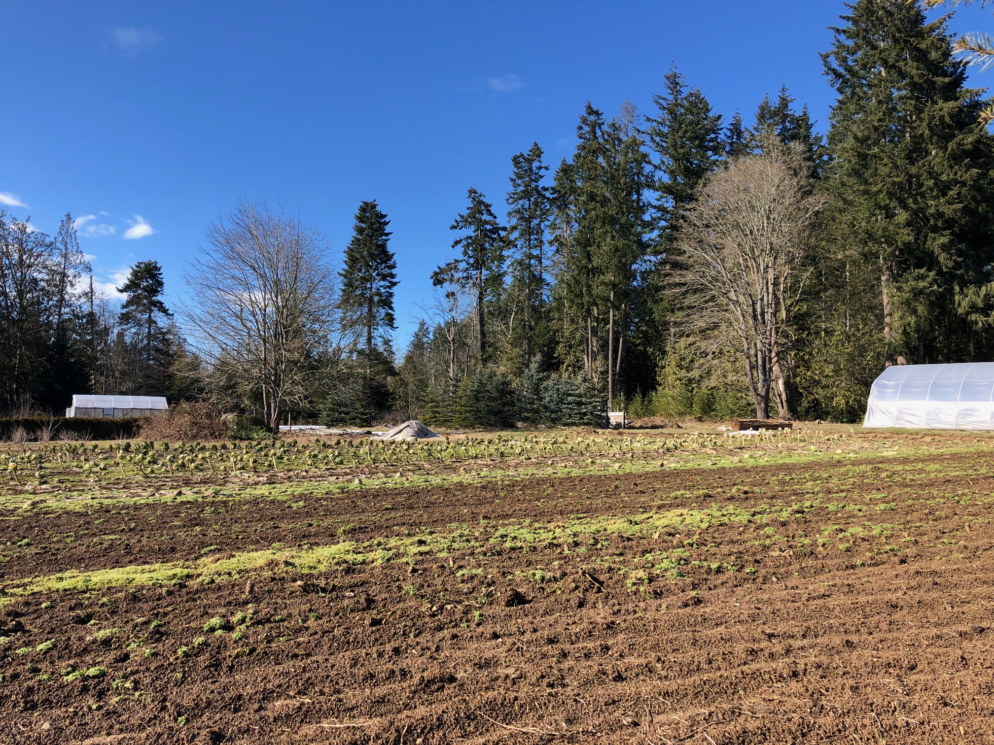 dudinks garden, farm job, nanaimo bc, berry pickers