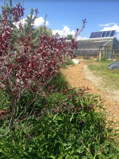 groundswell network society, farm job, invermere