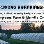 JULY 14, 2019: MERVILLE, BC – Farm Tour, Potluck, Weeding Party & Co-op Discussion with Tendergreens Farm