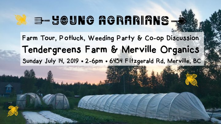 tendergreens farm, merville bc, farm tour