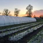 FARM JOB: PICTON, ON – Edwin County Farm, Field Manager