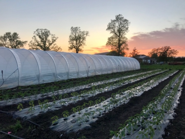 edwin county farm, farm job, picton, ontario, organic