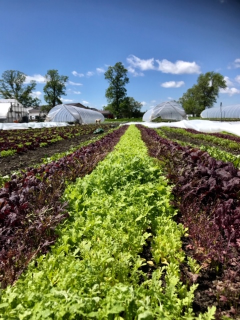 edwin county farm, farm job, picton, ontario, organic