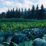 Kootenay Farm Directory: Spring 2020