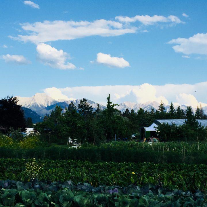 Edible Acres