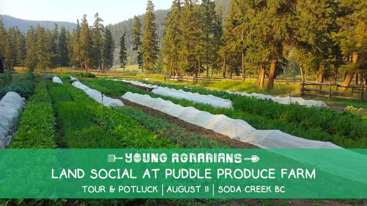 puddle produce farm, land social, williams lake, soda creek