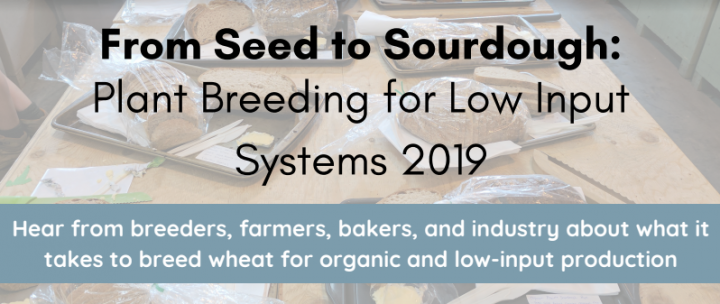 sourdough-plant-breeding