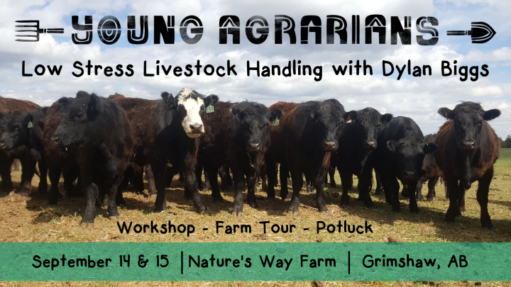September 14 & 15 _Nature's Way Farm_ Grimshaw, AB-2