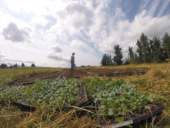 bc seed farm, abbotsford, vancouver