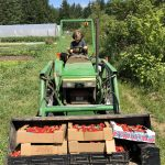 FARM JOB: SALT SPRING ISLAND, BC – Golden Tree Farm, Lead Farmer
