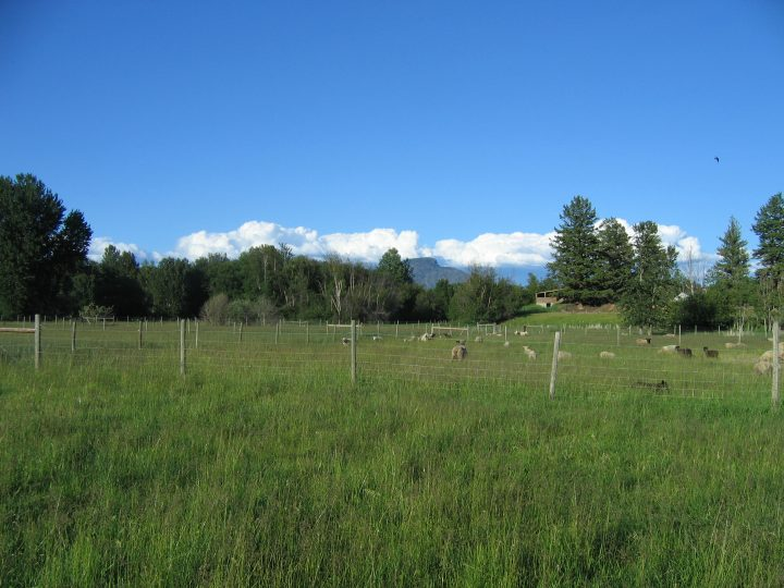 East view from subdivided pasture
