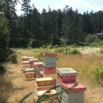 Prior Street Bees on beekeeping on leased land