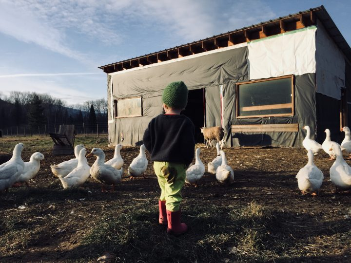 Baby and ducks @ Forrest Farm