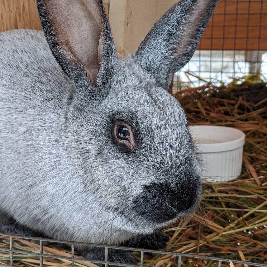 thimbleberry farm, terrace, rabbit