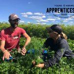 YA Apprenticeship 2021: Red Deer, AB – Steel Pony Farm