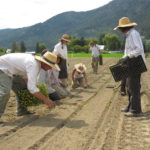 FARM JOB: ENDERBY, BC: Wild Flight Farm – Organic Vegetable Farm Manager