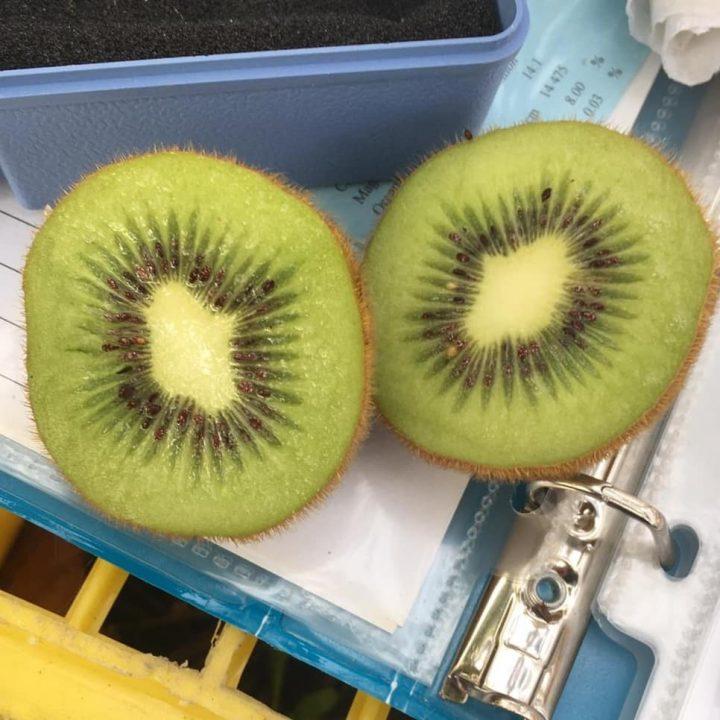 Delicious kiwi crop!