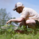 FARM JOB: PRINCE EDWARD COUNTY, ON – Blue Wheelbarrow Farm, Field Manager