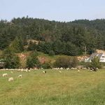 FARM JOB: METCHOSIN, BC – Parry Bay Sheep Farm, Farm Workers