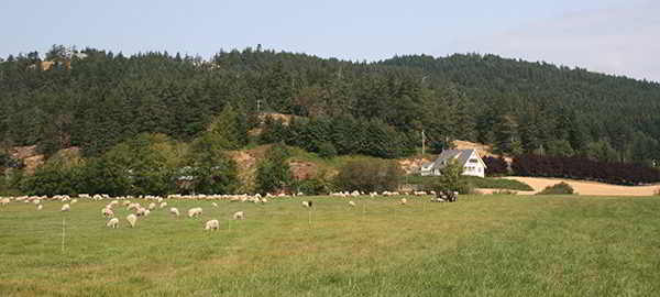 parry bay sheep farm, metchosin, victoria, vancouver island, farm job