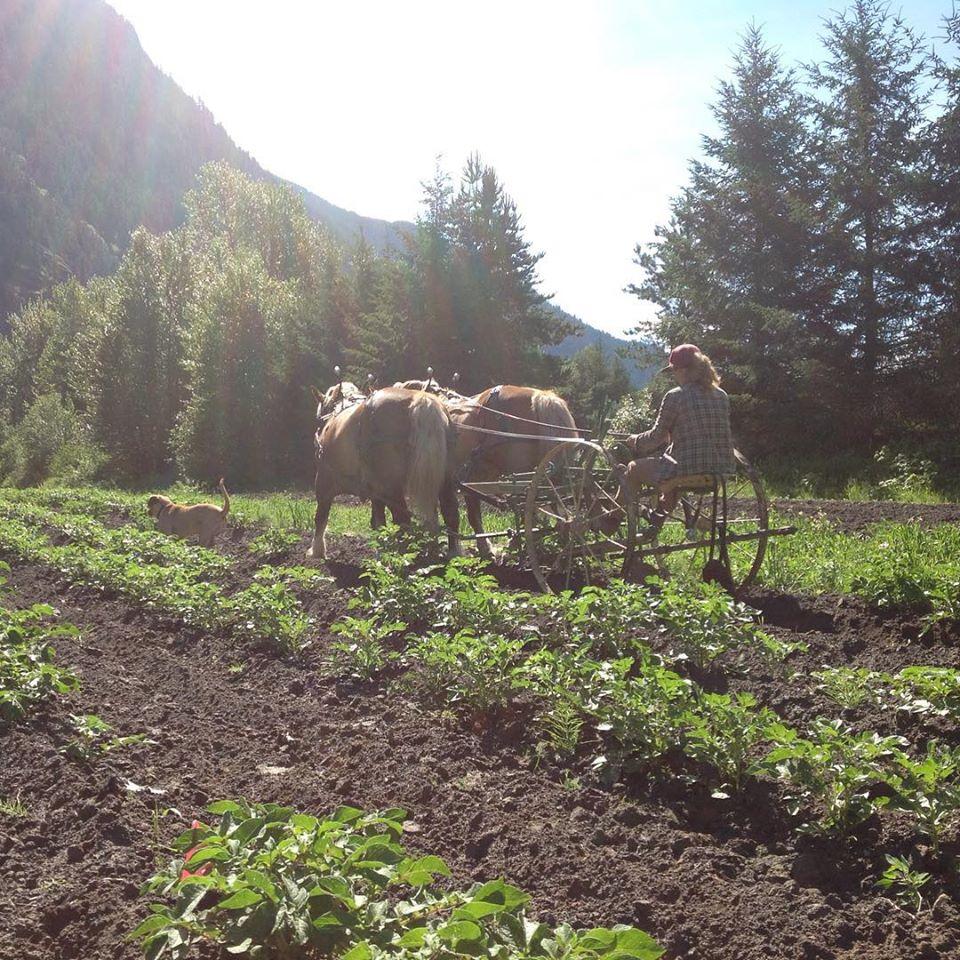 four beat farm, farm job, pemberton