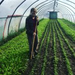 [Filled] FARM JOB: ARMSTRONG, BC – Pilgrims' Produce, Market Garden Farm Worker
