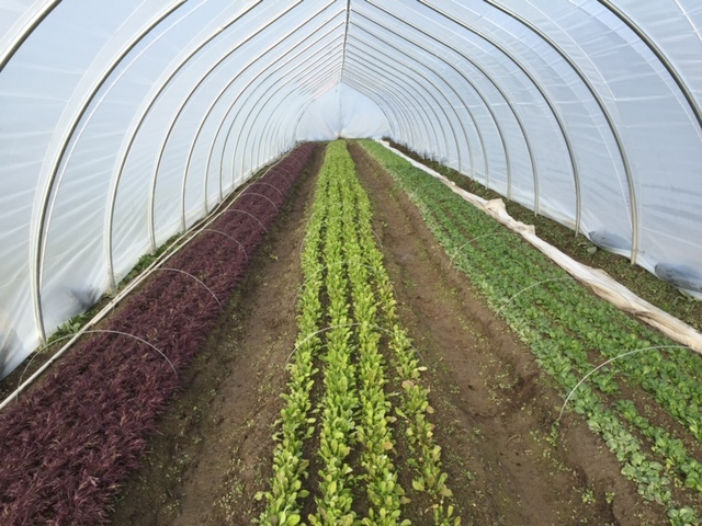 stable harvest farm, langley, vancouver, farm job