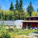 LAND OPPORTUNITY: 2 acres with market gardening mentorship for lease – Powell River, BC