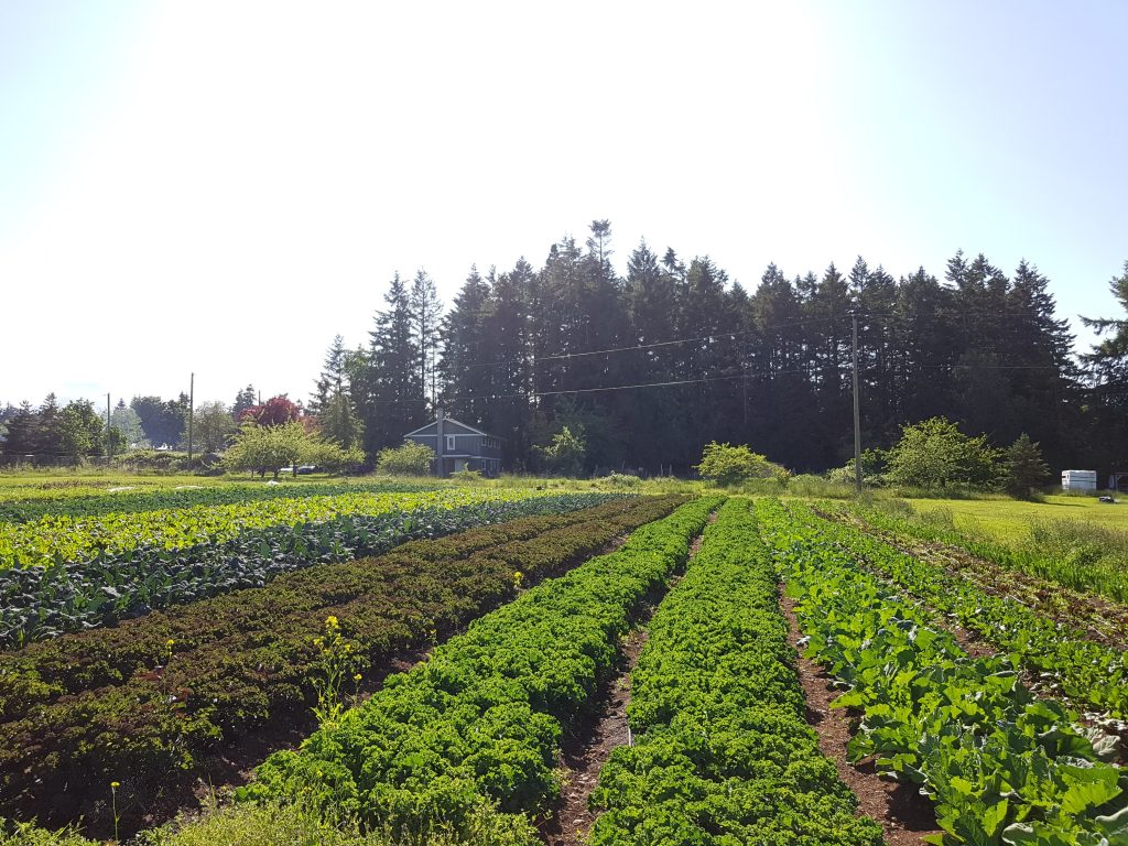 Salt & Harrow Farm, farm job, tsawwassen, vancouver