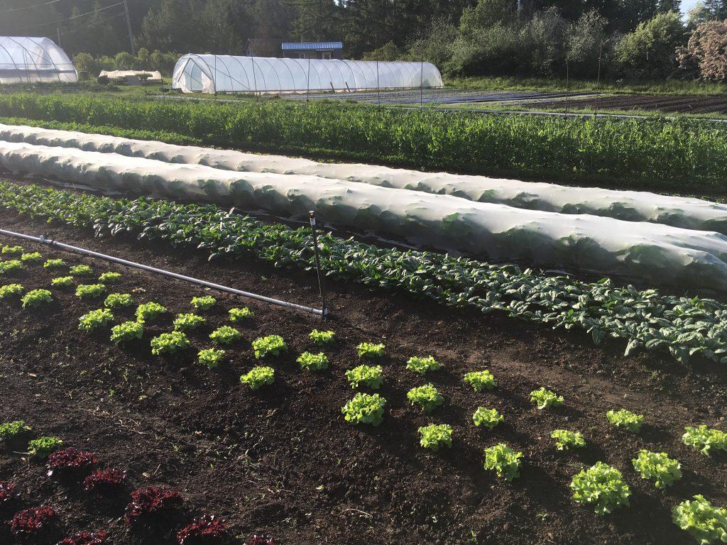 Tatlo Road Farm, farm job, crofton, duncan