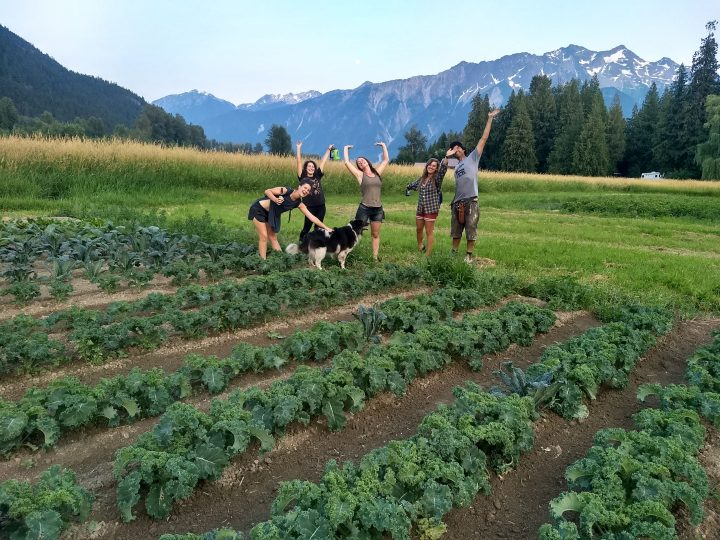 laughing crow organics, farm jobs, pemberton