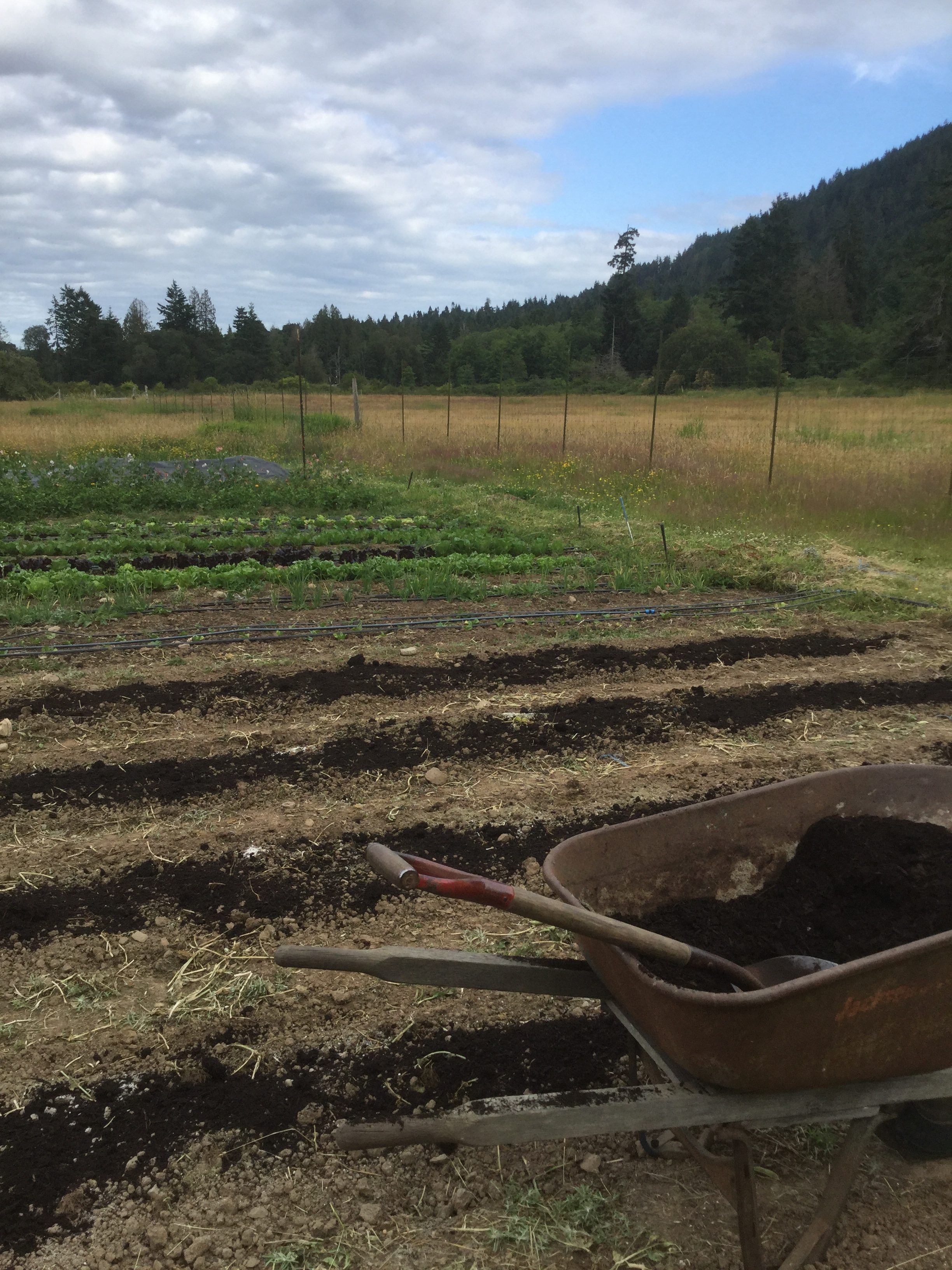 heavenly roots farm, salt spring island, farm, apprenticeships, internships