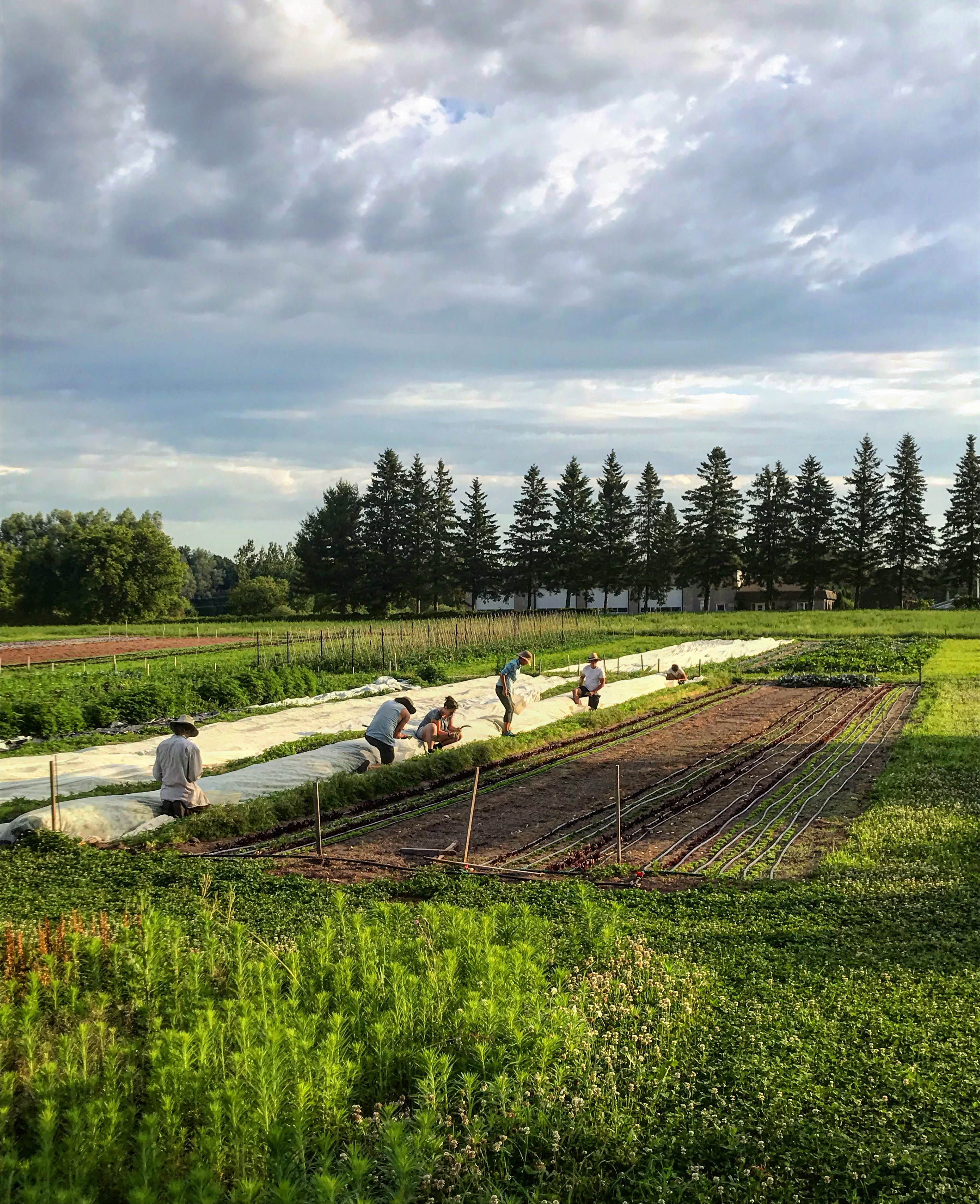 Blue Wheelbarrow farm, prince edward county, picton, ontario, farm job, field manager