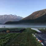 FARM JOBS: Pemberton, BC – Plenty Wild Farms, Organic Farm Workers 2020