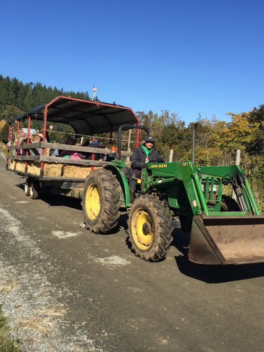 providence farm, duncan bc, farm job, vancouver island, cowichan