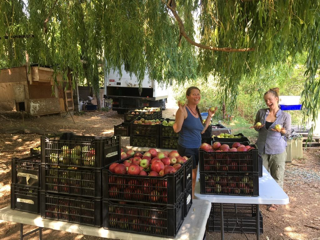 sapo bravo organics, lytton, farm, apprenticeship, internship