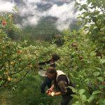 APPRENTICESHIP: LYTTON, BC – Sapo Bravo Organics