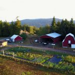 LAND OPPORTUNITY: Organic Market Garden Business Lease Opportunity – Salt Spring Island, BC