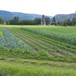 FARM APPRENTICESHIP: OYAMA, BC – 4 Elements Farm