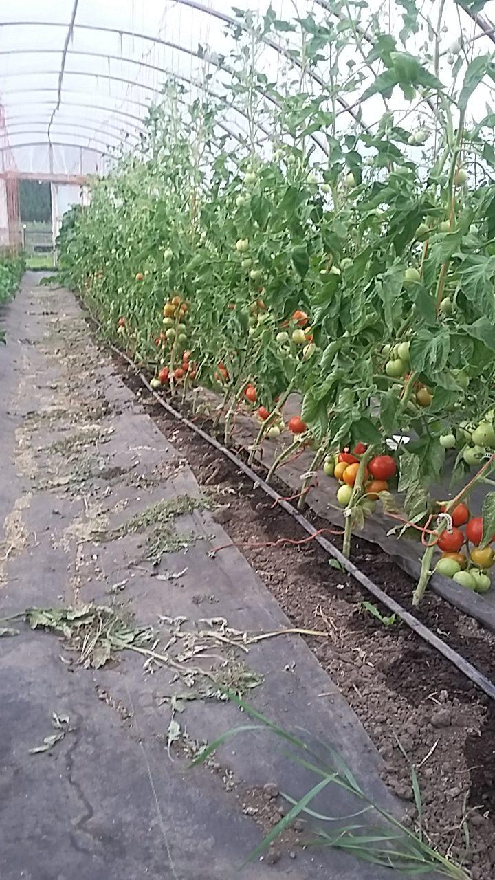 4 elements farm, farm apprenticeship, internship, oyama, kelowna, vernon