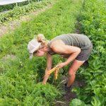B.C. Business Mentorship Network – Sweet Acres Farm