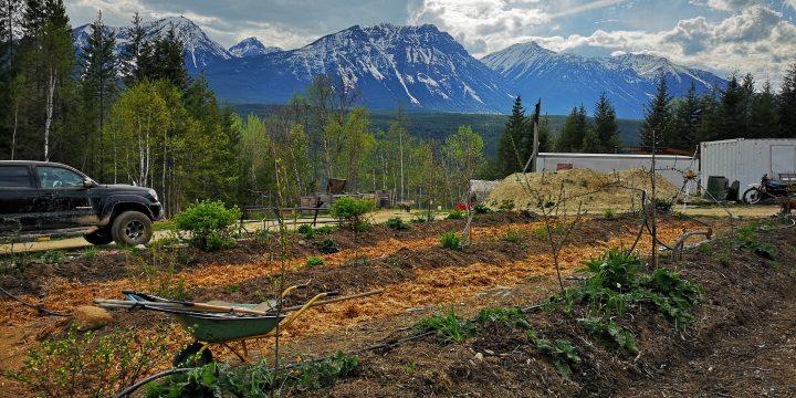 goonieland permaculture farm, golden, farm apprenticeship