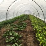 Filled ~ FARM JOB: SUMMERLAND, BC – Medley Organics