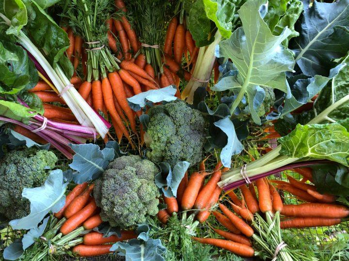 capital greens urban Farm, farm job, ottawa, ontario
