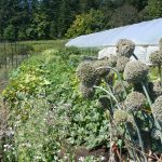 Filled ~ FARM JOB: VICTORIA, BC – Rebecca's Garden
