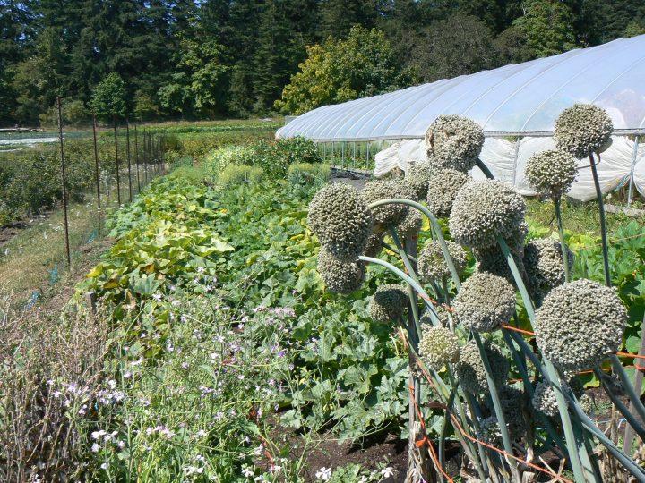 rebeccas garden, victoria bc, farm job, vancouver island