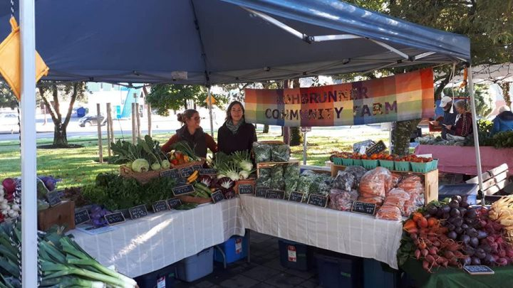 Farmers Market in the shade.