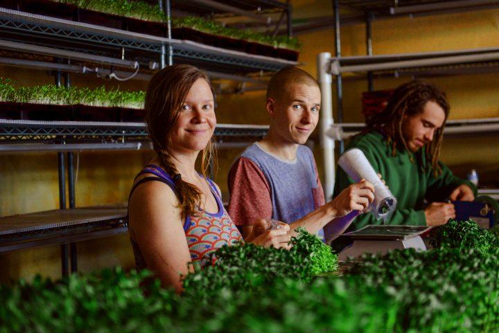 chuckleberry farm, beasley, nelson, kootenays, farm apprenticeship, internship