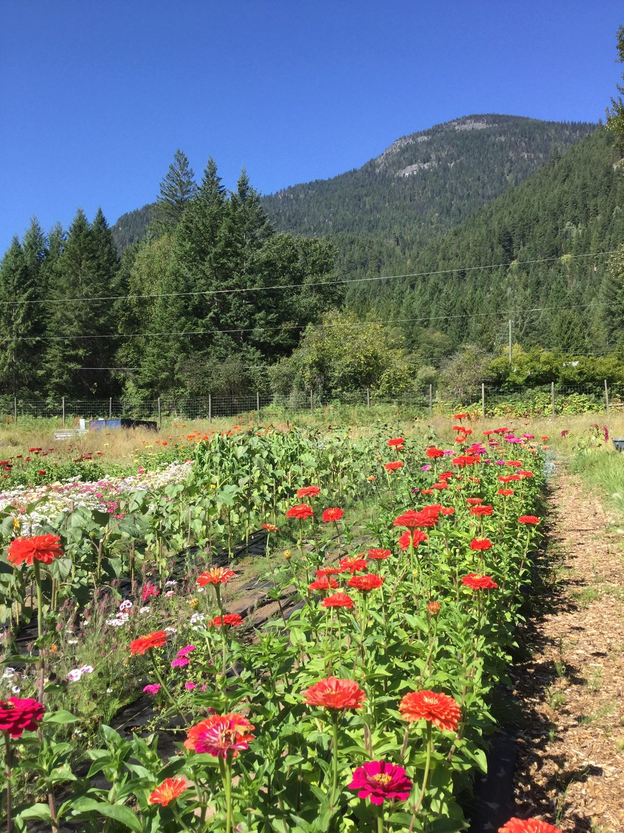 Hummingbird Farm, nelson, bc, kootenays, farm job
